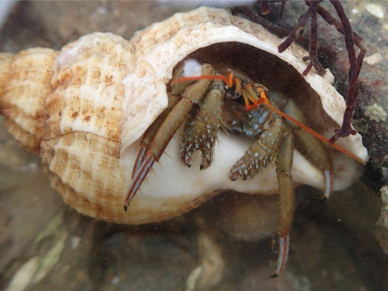 Causerie biologie marine des estrans rocheux – Pornic