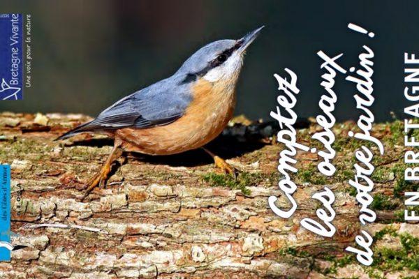 Le comptage des oiseaux des jardins se déroulera les 26 et 27 janvier 2019