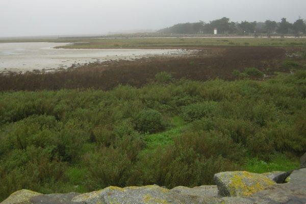 Collecte de déchets – Baie de Bourgneuf