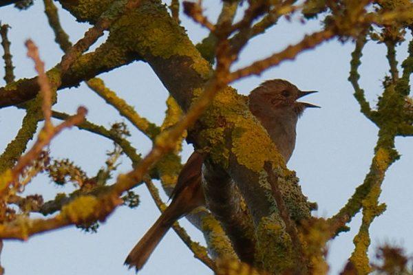 Conférence : reconnaître les oiseaux par leurs chants