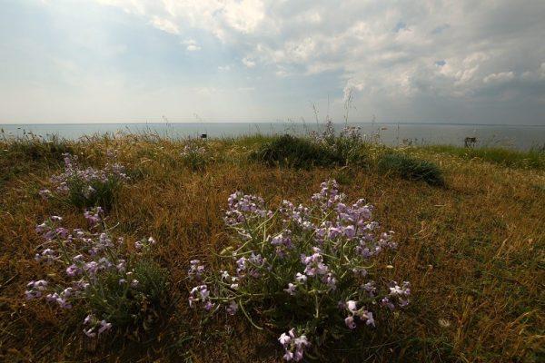 Sortie Nature : des plumes et des plantes – St Michel Chef Chef