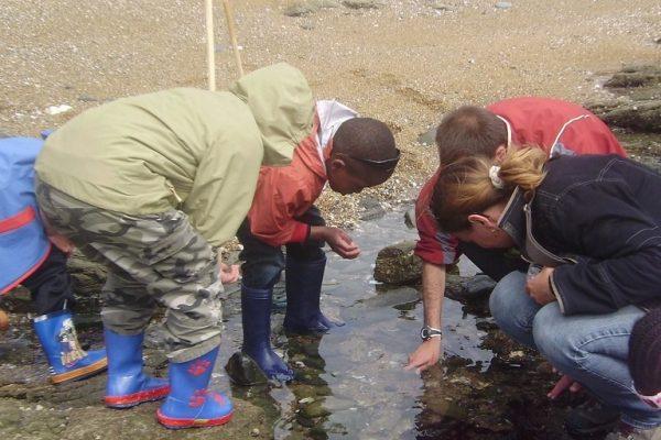 Sortie nature : Sur les rochers à marée basse