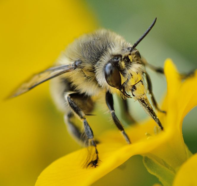 Pour les pros : sortie nature abeilles sauvages