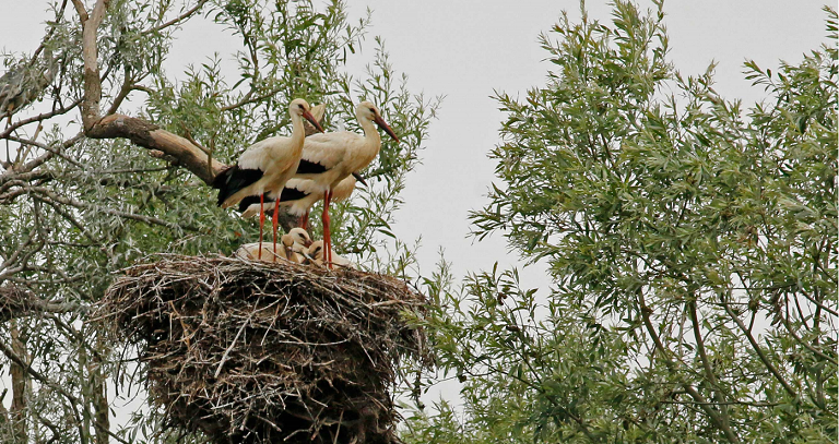 Sortie nature : Les oiseaux de passage