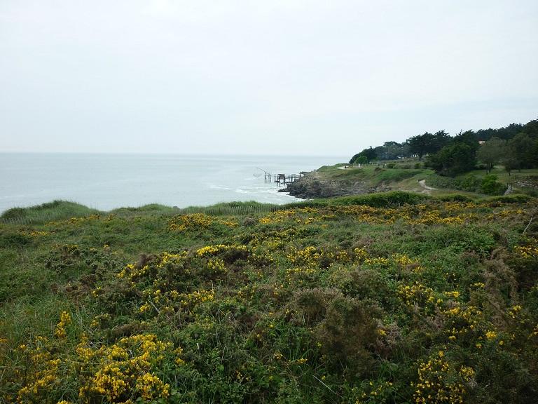 Sortie nature : balade dans les landes 2019 – Préfailles