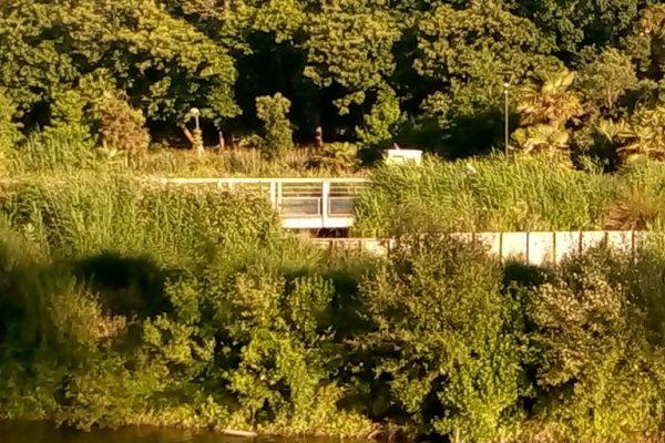 Sortie nature : de la ria au canal de la Haute Perche – été 2019