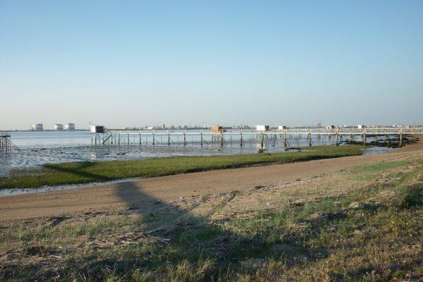 Sortie Nature : Oiseaux de l'estuaire
