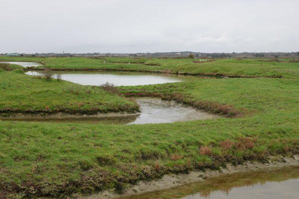 Sortie nature : Au coeur du Marais Breton