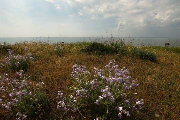 Sortie nature : Des plumes et des plantes