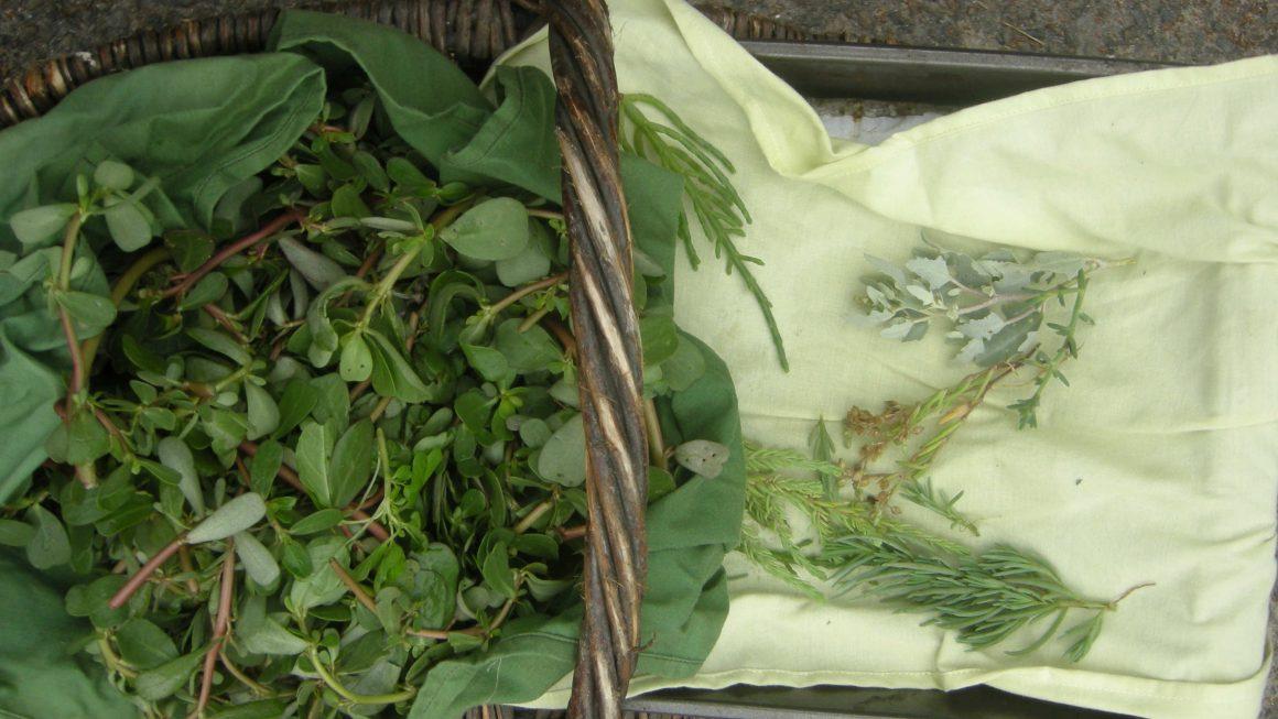 Sortie nature : Balade botanique gourmande