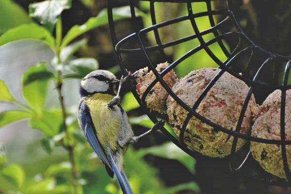 Atelier nature parent/enfant : Aidons les oiseaux en hiver